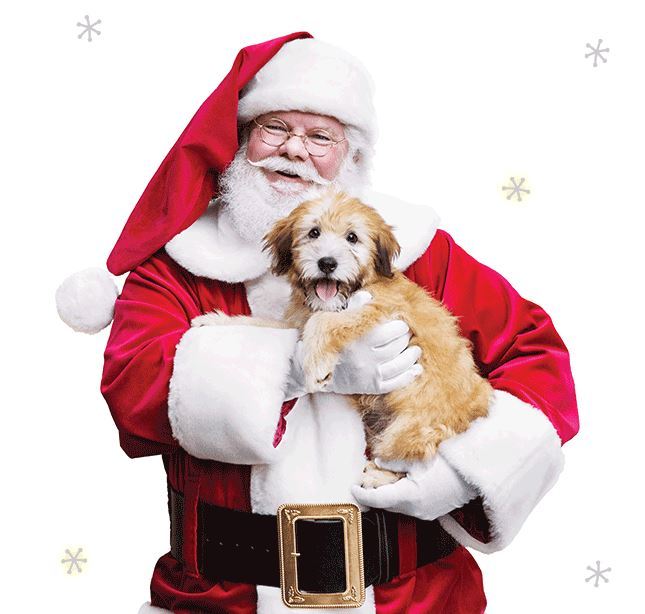 Santa Claus with Puppy